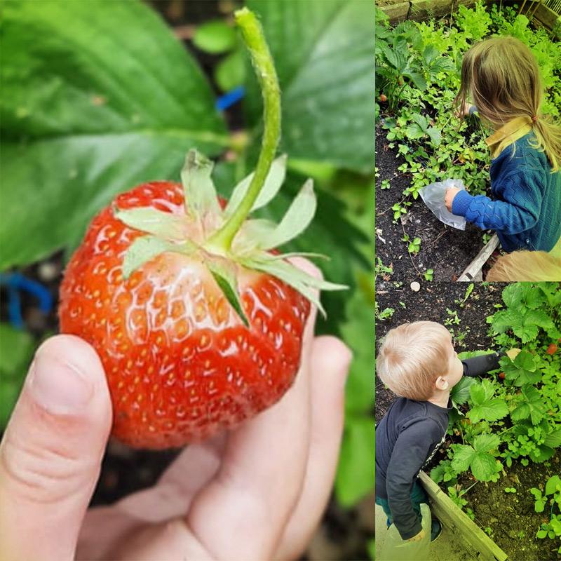 Zaaien en oogsten met kinderen